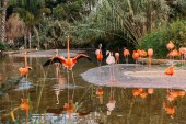 Fotografie flock of beautiful flamingos in pond surrounded with lush plants in zoo, barcelona, spain
