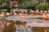 lake with beautiful flamingos surrounded with lush plants, barcelona, spain