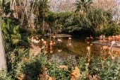 fenicotteri a piedi nel laghetto di zoo circondato con piante lussureggianti, Barcellona, Spagna