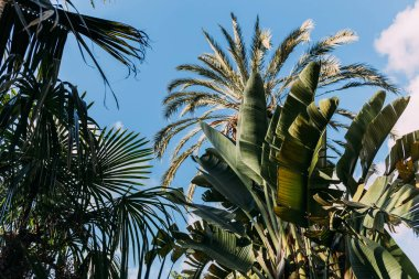 Lush green plants on blue clear sky background, barcelona, spain stock vector