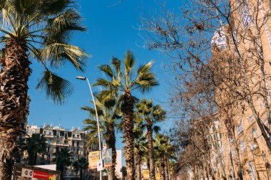 BARCELONA, SPAIN - DECEMBER 28, 2018: urban scene with buildings and tall green palm trees