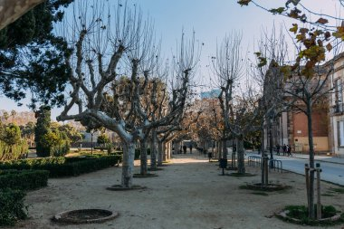 BARCELONA, SPAIN - DECEMBER 28, 2018: wide alley with plane-trees and trimmed bushes