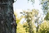 szelektív összpontosít, fa békés parkban található Égszínkék
