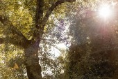 low angle view of bright sunshine through tree with green leaves in park