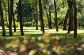 Photo selective focus of trees with green leaves in peaceful park