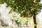 napsütés, a fa levelei és fa Madáretető