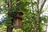 dřevěné krmítko na strom v zeleném klidném parku