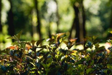 """Картина, постер, плакат, фотообои """"селективный фокус зеленых листьев на деревьях в мирном парке печать архитектура"""", артикул 249610964"""