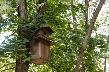 Wooden bird feeder on tree in green peaceful park stock vector