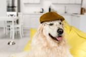 Fotografie  cute golden retriever in cap and glasses lying looking away