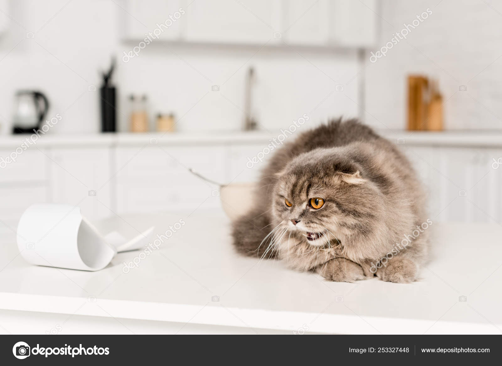 33eb4a0d22ec41 Selective Focus Cute Grey Cat Lying White Surface Hissing — Stock Photo
