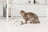 Photo cute and adorable grey cat on floor looking away in messy kitchen