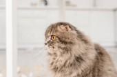 boční pohled roztomilé a šedá kočka koukal v bytě
