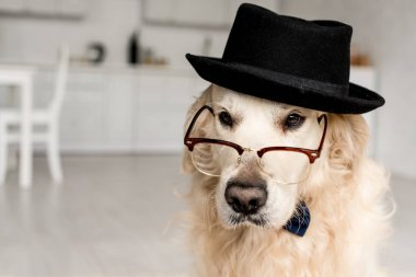 Cute adorable golden retriever in hat and glasses in apartment stock vector