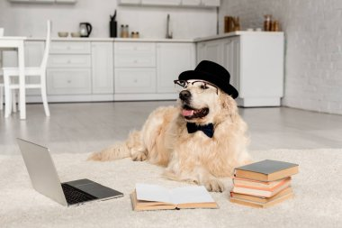 Cute golden retriever in bow tie, glasses and hat lying on floor with laptop and books stock vector