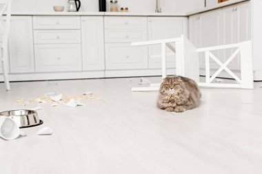 cute and grey cat lying on and looking at camera floor in messy kitchen