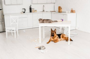 Cute and grey cat lying on white table and German Shepherd lying on floor in messy kitchen stock vector