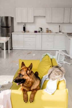 Cute German Shepherd and grey cat lying on bright yellow sofa in messy apartment stock vector