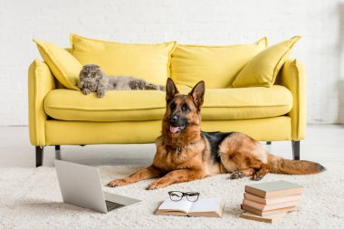 Cute German Shepherd lying on floor with laptop and books in and grey cat lying on couch stock vector
