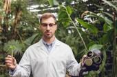 schöner Wissenschaftler in weißem Mantel und Brille mit Gummigasmaske und Fläschchen mit Pflanzenprobe in der Orangerie