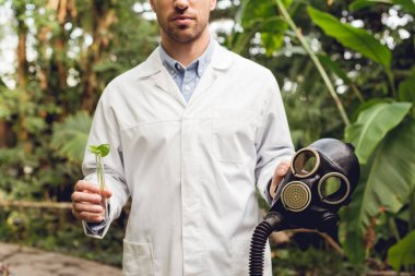 partial view of scientist in white coat holding rubber gas mask and flask with plant sample in orangery