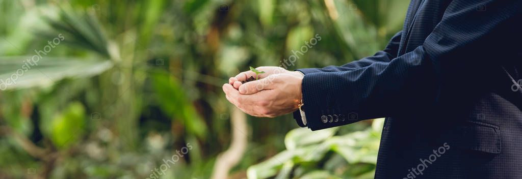 panoramic shot of businessman in suit holding green sprout and ground in hands in orangery