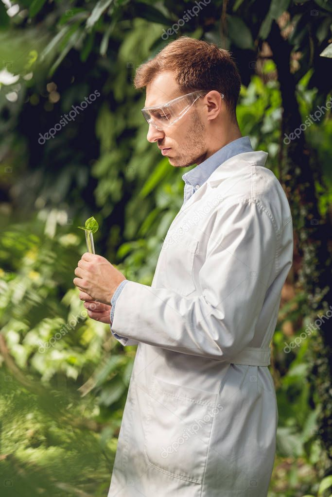 handsome scientist in white coat and goggles examining plants in orangery