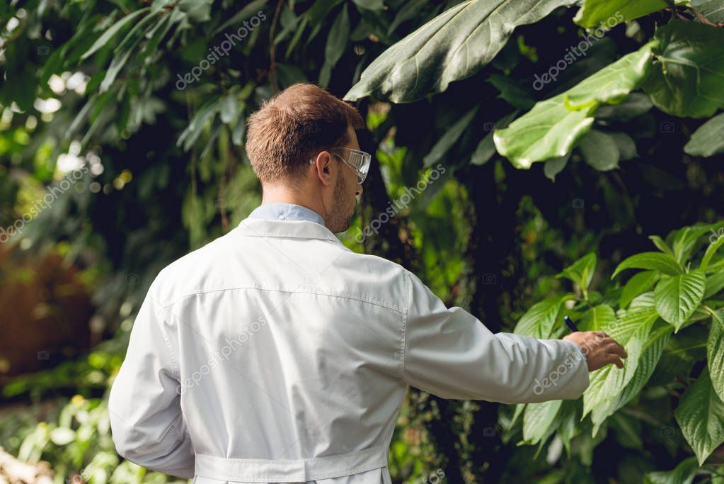 back view of scientist in white coat and goggles examining plants in orangery