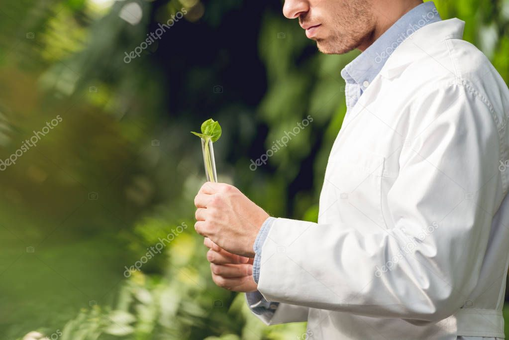 cropped view of scientist in white coat holding flask with plant sample in orangery