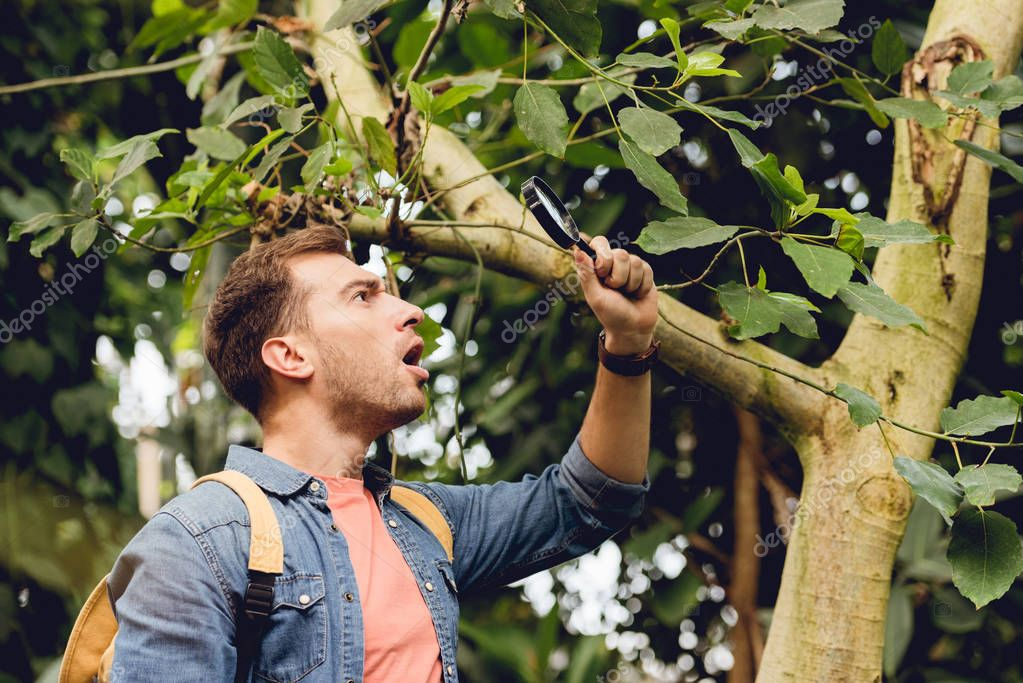 shocked traveler with backpack examining tree with magnifier in tropical forest
