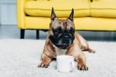 aranyos Francia Bulldog feküdt szőnyegen közelében csésze otthon