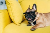 Photo adorable french bulldog in black bow tie and glasses lying on yellow sofa at home