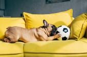 aranyos Francia Bulldog játszik a futball sárga kanapé otthon