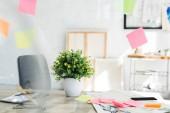 rostlina se zelenými listy na dřevěném stole v blízkosti rychlých poznámek a módních náčrtků