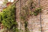 Fotografia vecchio muro di mattoni con piante verdi a Roma, Italia