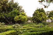Garten mit Bäumen, Sträuchern und grünem Gras in Rom, Italien