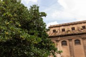 selective focus of green tree and building under blue sky in rome, italy