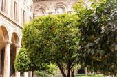 Rom, Italien - 28. Juni 2019: Obstbäume mit Zitronen und Mandarinen vor alten Gebäuden in Rom, Italien