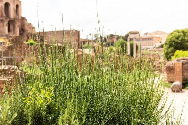 green grass in front of buildings in sunny day in rome, italy
