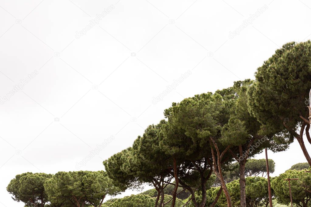 trees with green foliage under grey sky in rome, italy