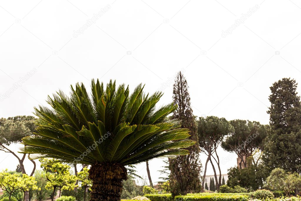 green trees and bushes under sky in rome, italy