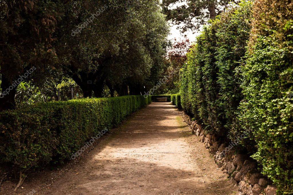green trees and bushes in sunny day in rome, italy