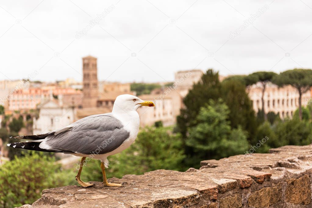 seagull on wall in front of trees and buildings in rome, italy