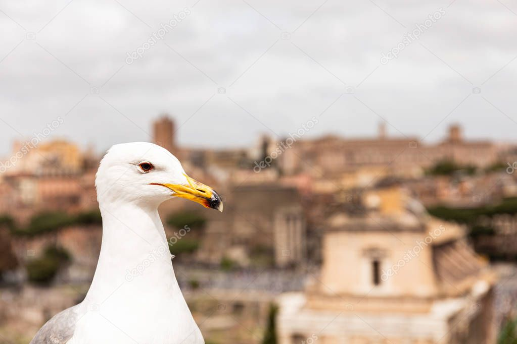white seagull in front of buildings in rome, italy