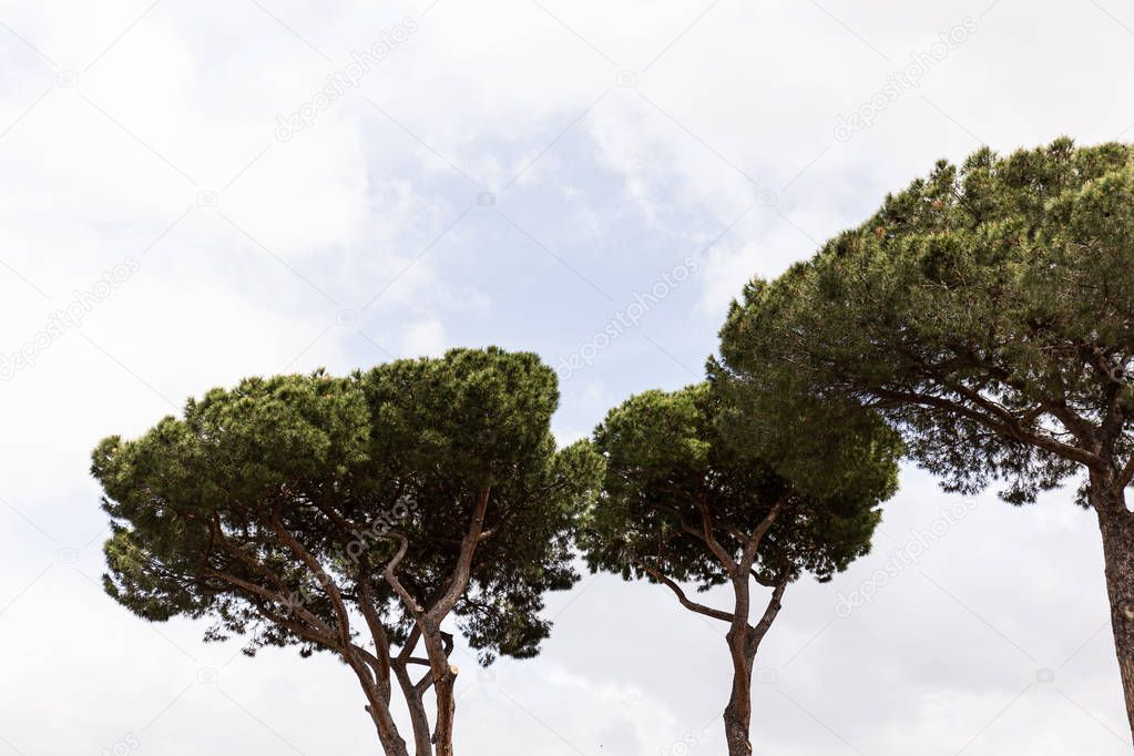 trees with green leaves under sky with clouds in rome, italy