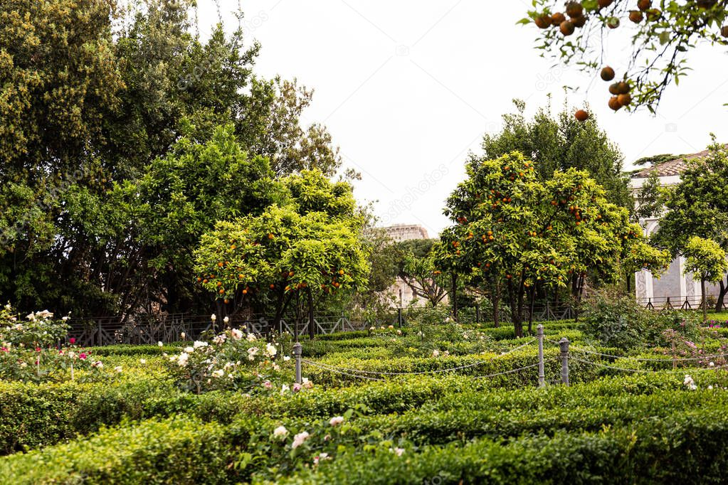 Garden with trees, bushes and green grass in rome, italy stock vector