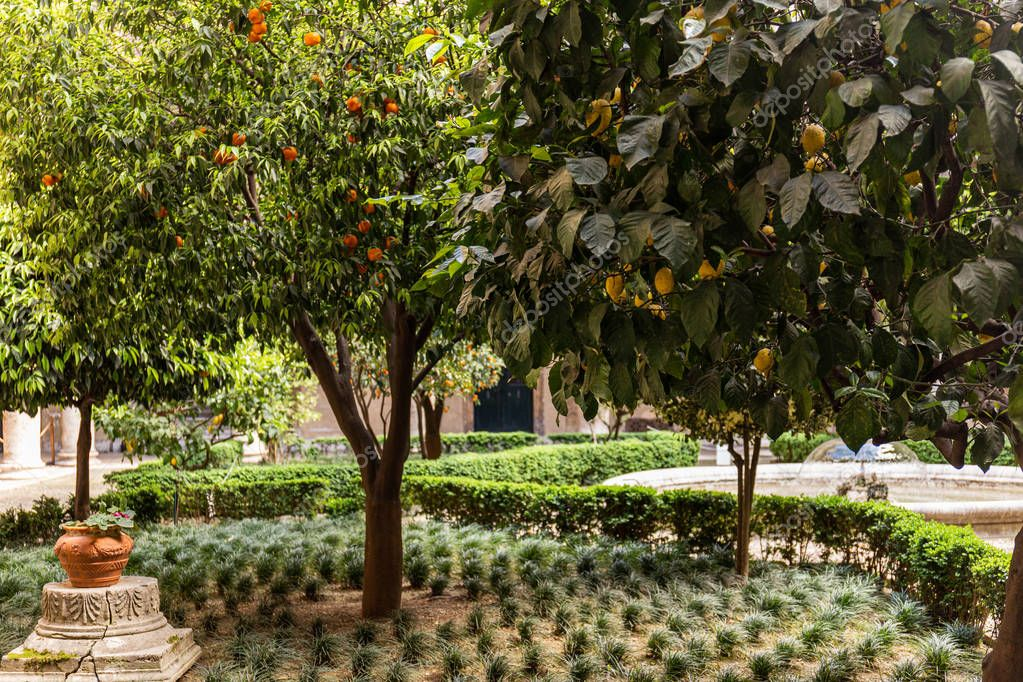 fruit trees with lemons and tangerines in rome, italy