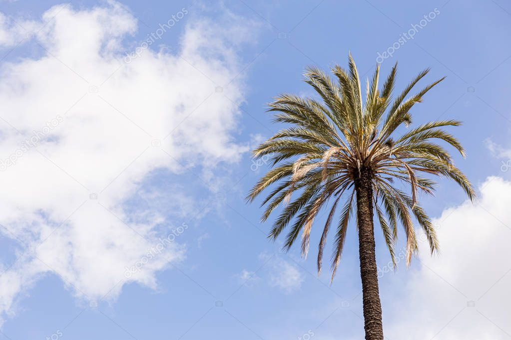 palm tree under blue sky with clouds in rome, italy