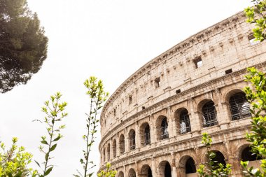 ROME, ITALY - JUNE 28, 2019: ruins of colosseum and green trees under grey sky stock vector