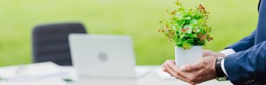 panoramic shot of man holding flowerpot in park near white table with office stuff